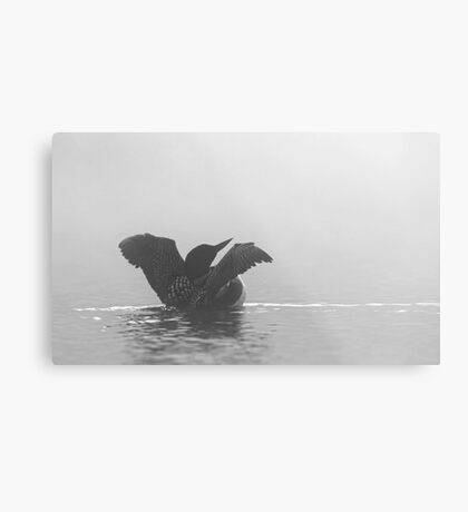 Common Loon - Wilson Lake Metal Print