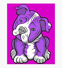 Pit Bull  Pup Tilted Head Cartoon Purple Photographic Print