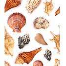 Seamless Seashell Pattern by Pamela Maxwell