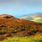 Multicolored Hills of Wicklow. Ireland by JennyRainbow