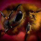Sometimes you can bee too close by missmoneypenny