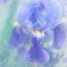 Painted Blue Iris by JennyRainbow