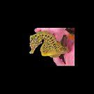 "Male Pot-Bellied Seahorse - ""Mikhail"" by Andrew Trevor-Jones"