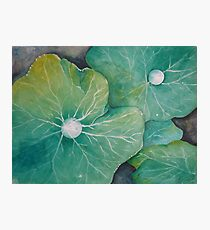 In Rosemary's Garden - Nasturtium Leaf with Dew Drops Photographic Print