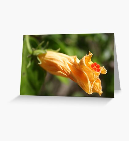 Yesterday's Golden Hibiscus Flower Greeting Card