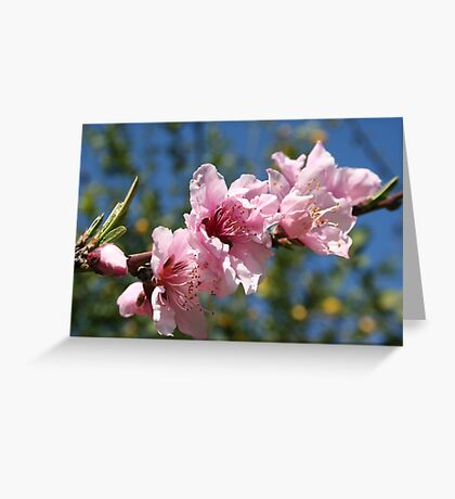 Close Up Peach Tree Blossom Against Blue Sky Greeting Card