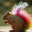 Rainbow Tail by Kitty Bitty