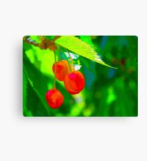 Red Cherries Painting Canvas Print