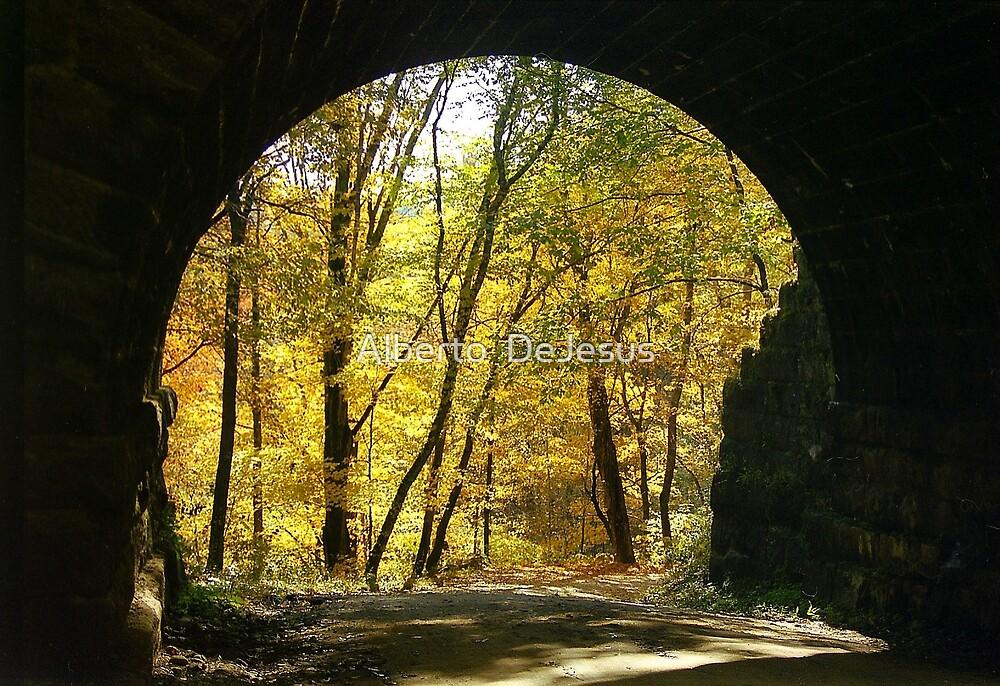 Autumn View  by Alberto  DeJesus