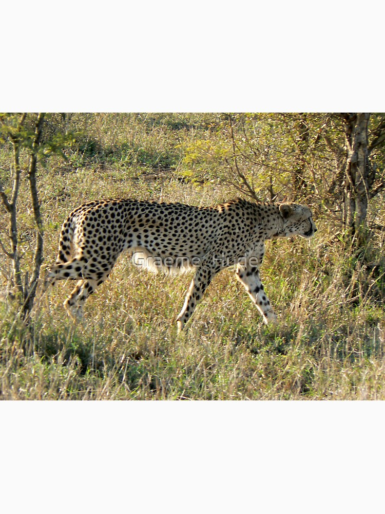 Cheetah in Kruger by grmahyde
