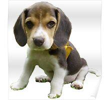 Cute Beagle Poster