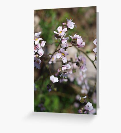 Diplopeltis hueglii (2) Greeting Card