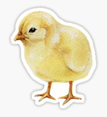 Watercolor Easter Chick, Fluffy Yellow Baby Chicken II Sticker