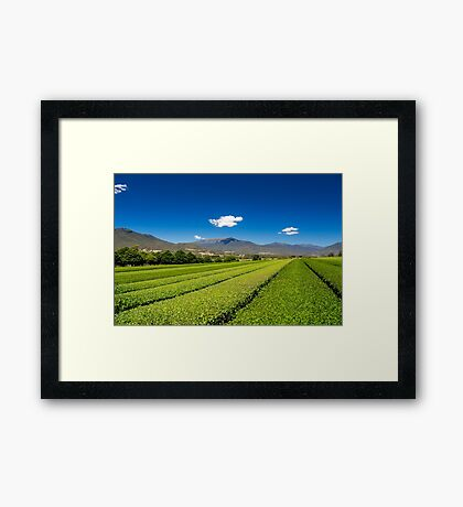 Tea in the Valley Framed Print