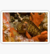 Sieve-Patterned Moray Sticker