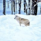 An Arctic Wolf's Winter Blues  by Poete100