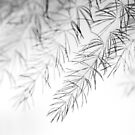 Branches by SunDwn