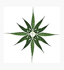 Cannabis leaves multiply Photographic Print
