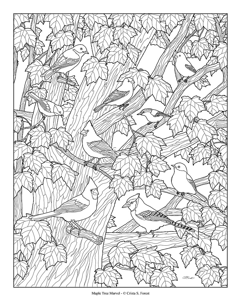 Maple Tree Birds Adult Coloring Page By Csforest