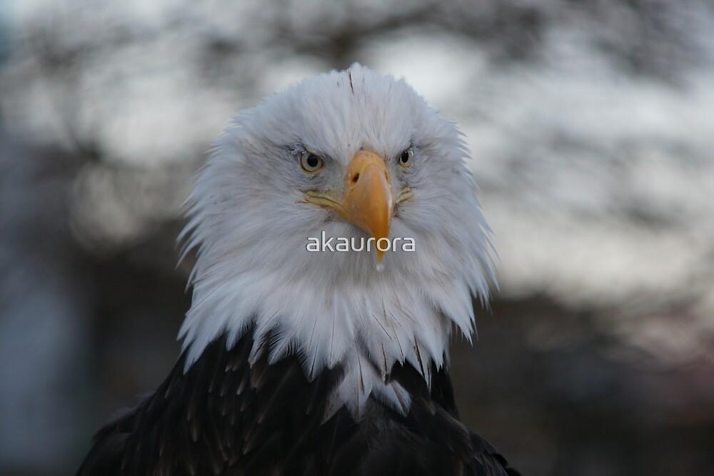 Freedom's Beauty by akaurora
