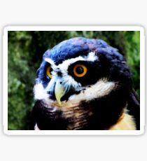 Spectacled Owl Sticker