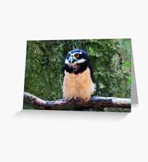 Spectacled Owl Greeting Card
