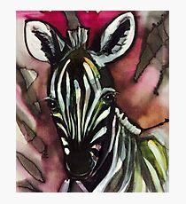 Zebra Baby Rosa Fotodruck