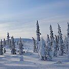 Winter Wonderland by akaurora