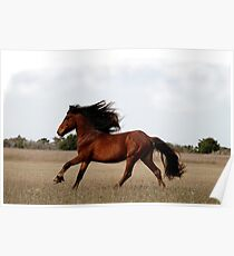 Cheval Poster