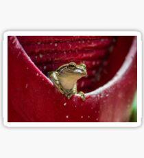 Floridian Frog In Vase  Sticker