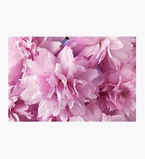 Pink Cherry Blossom Photographic Print