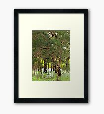 Paper Bark Wetlands  Framed Print
