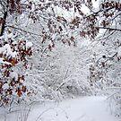 Winter Wonderland  by clizzio