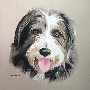 Millie the wonderful Bearded Collie by micheleashby