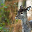 Deer portrait  by yampy