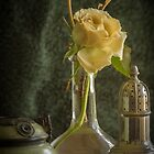 Perfume of Marrakesh by Clare Colins