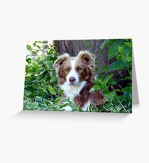 Beauty In Camouflage - Border Collie - NZ Greeting Card
