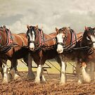Horse Power by Trudi's Images
