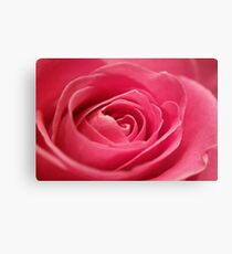 Beautiful Pink Rose Blossom Canvas Print
