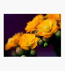 Kalanchoe bloom Photographic Print