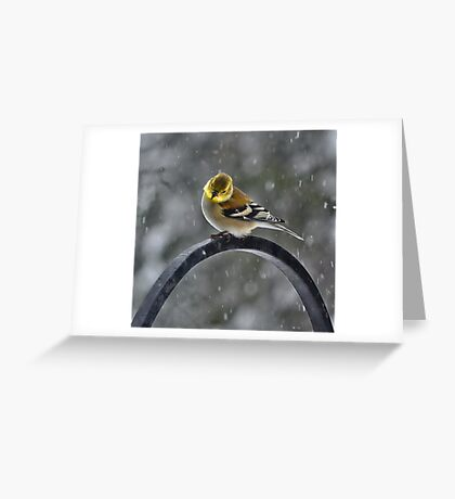-Can Spring Be Far Behind? Greeting Card