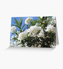 Flowers in Lisbon, Portugal Greeting Card