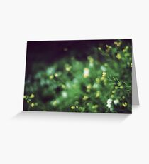 The softness of spring Greeting Card