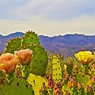 Cactus and Flowers by John Butler