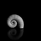 tiny curl by Clare Colins