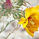 Yellow Desert Flower by K D Graves Photography