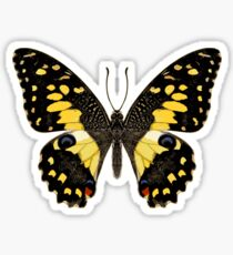 Lime Butterfly Sticker