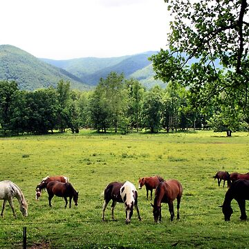 Cades Cove by HisRuin