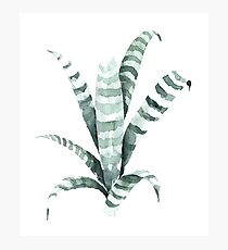 Tiger Plant Watercolor Painting Photographic Print
