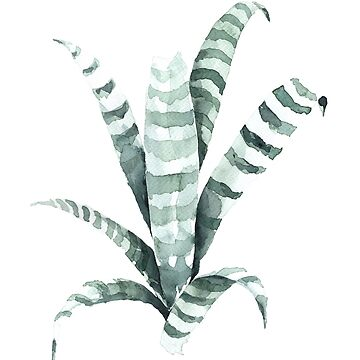 Tiger Plant Watercolor Painting by annetweelink